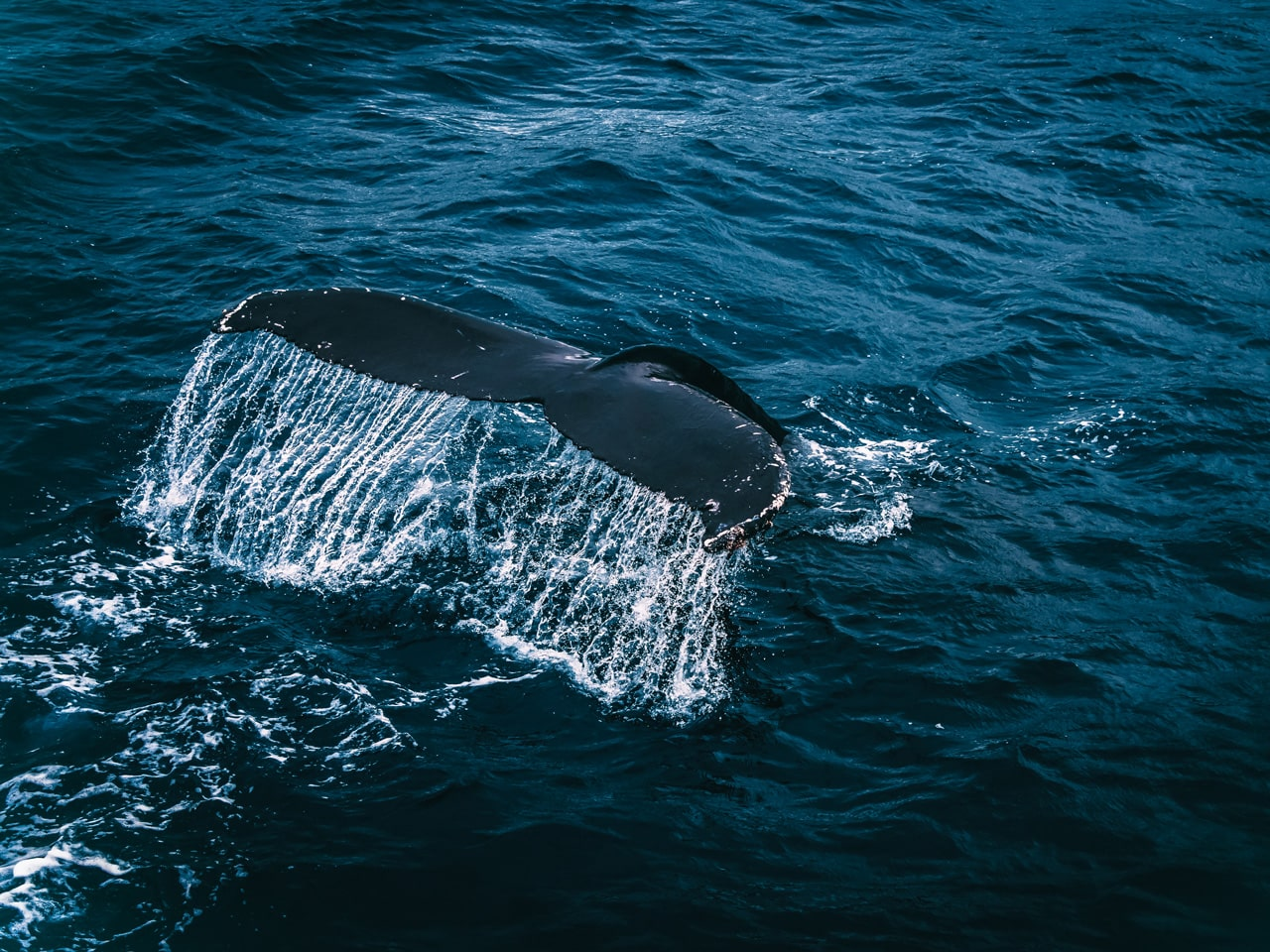 Whale Cruises
