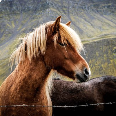 Horse-riding holidays and short breaks in Scotland